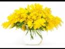 С 8 марта, девочки, мамочки и бабушки!