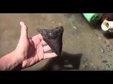 We Found A Megalodon Shark Tooth!!
