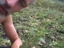 Портулак - лечебный сорняк