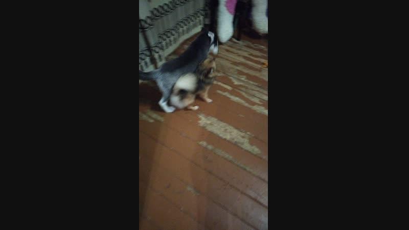 Миша гард