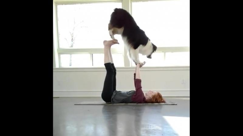 Собака выполняет йогу с хозяйкой
