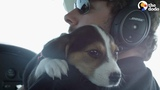 Pilots Help Dogs Find Forever Homes The Dodo
