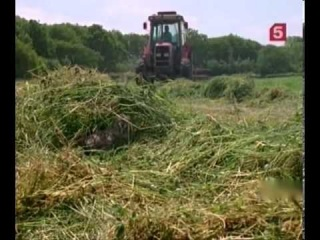 BBC Мир природы Ферма пяти сов Совы