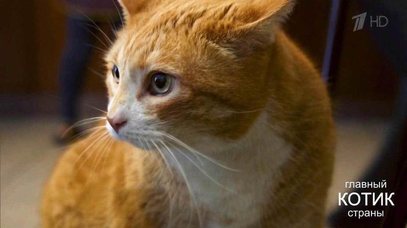 Претендент название Главного котика страны кот Рыжик Главный котик страны Фрагмент выпуска от24 09 2017