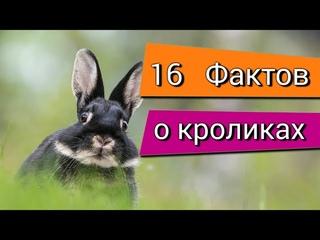 Интересные факты о кроликах