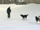 Стая бездомных собак держит в страхе микрорайон в поселке Дубинино