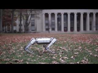 Робот Mini Cheetah, который умеет делать сальто и не только