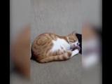 Скучающий по хозяину кот растрогал интернет-пользователей