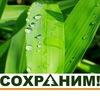 Sokhranim Zaeltsovsky-Bor