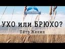 Женин Пётр тема: Ухо или брюхо