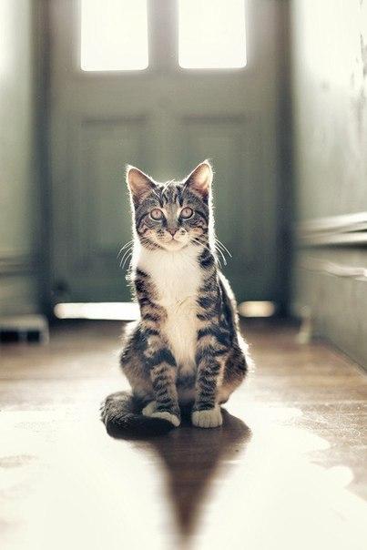 Кіт фото