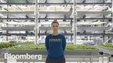 This High-Tech Farmer Grows Kale in a Factory