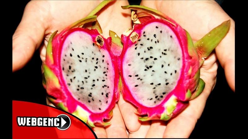 Dünyanın Bilinmeyen 20 Meyvesi ♛