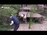 Панда просит у жадного барыги дозу