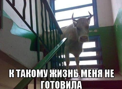 прикольные картинки юмор: