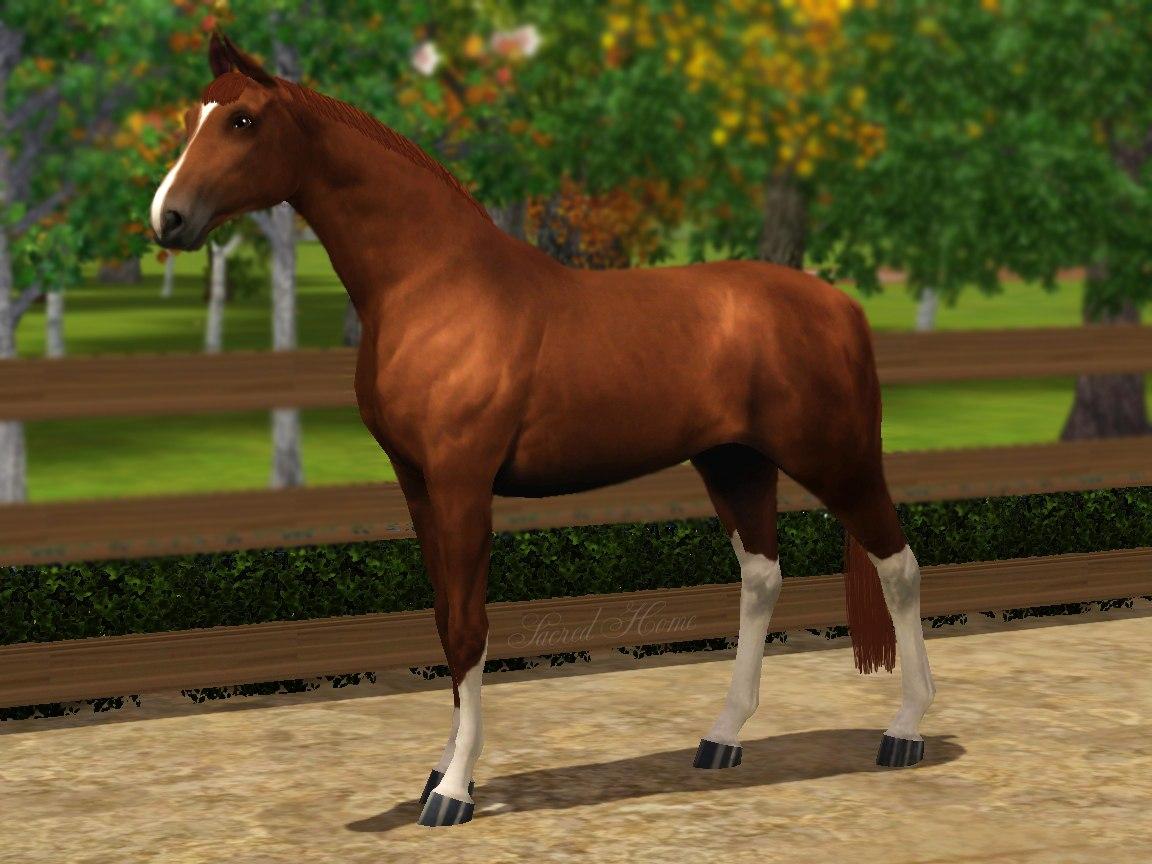 Регистрация лошадей в RHF 1.1 - Страница 2 P4quEHaL0b0