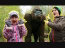 🦍 КИНКОНГ из ❄️ЛЕДНИКОВОГО ПЕРИОДА в реальной ЖИЗНИ ICE PARK Парк Сказка Видео для детей