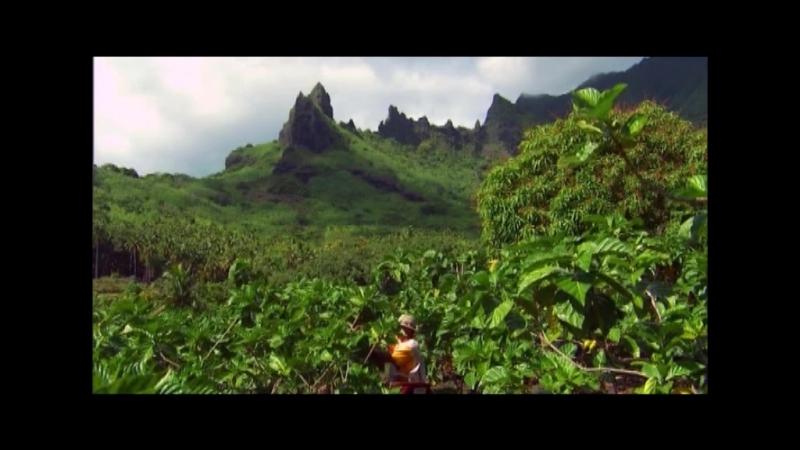 От дерева нони до бутылки TAHITIAN NONI Оригинал Натуральный сок нони Максимальный результат