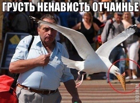 http://cs614831.vk.me/v614831708/3aaa/l_oCs5qhb0Y.jpg