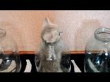 Смешные кошки приколы про кошек и котов 2017 #16 (Из жизни котика и его мамы)