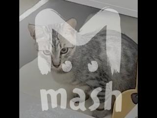 В киевском магазине наглый кот гадит в контейнер с сахаром