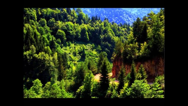 ტყე შეუნახე შვილებსა mp4 2 ვარიანტი