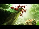 Букашки 3D. Приключение в Долине муравьев / Minuscule – La vallée des fourmis perdues (2013) — детский/семейный на Tvzavr