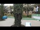Бассейн с грязными арабами