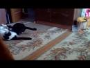 Котиный рестлинг:)