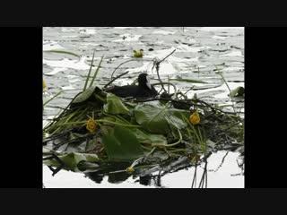 Птицы - от весны до осени (от ,,грачи прилетели,, до ,,грачи улетели,,). музыка Jon Lord.