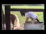 Смешные животные - лошади