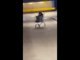 Woman takes a ride down a ramp in a shopping cart