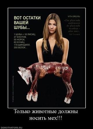 грустные картинки с животными: