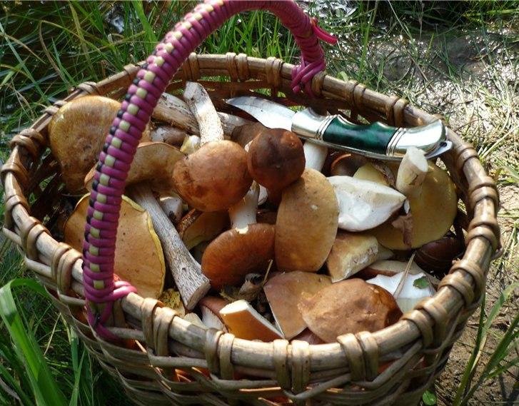 В Таганроге зафиксированы случаи отравления дикорастущими грибами