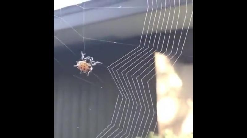 Рукоделие паучка