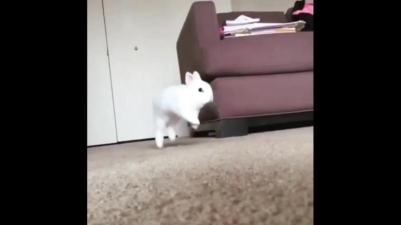 He soar