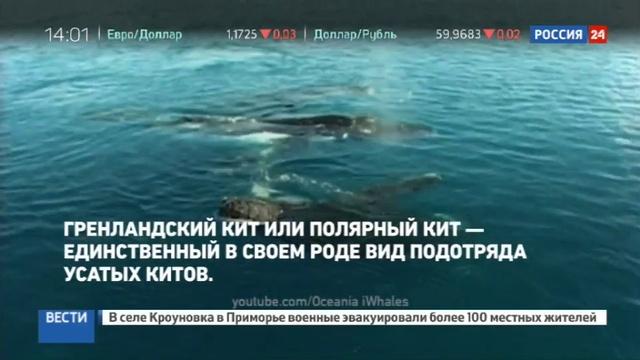 Новости на Россия 24 • Застрявшего кита спасет ночной прилив