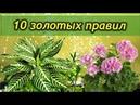 10 золотых правил ухода за комнатными растениями Это должен знать каждый цветовод