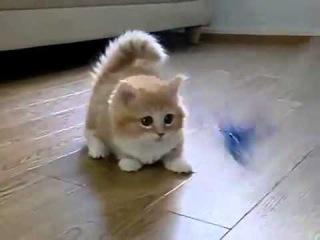 Няшный котенок