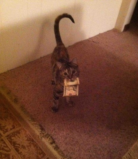 А Ваш кот так умеет?