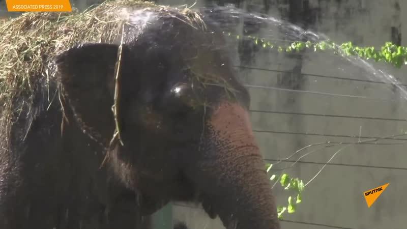 Как спасают зверей от жары в Бразилии