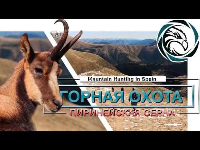 ГОРНАЯ ОХОТА НА ПИРЕНЕЙСКУЮ СЕРНУ (Mountain hunting in Spain / pyrenean chamois)