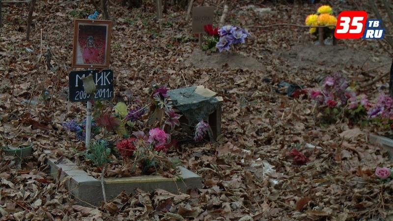 Несанкционированное кладбище домашних животных ликвидируют в Череповце