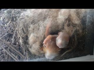 Белка свила гнездо у окна жилого дома - Типичный Нижний Новгород