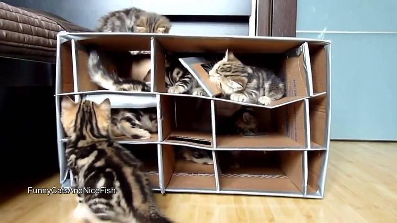 Картонная кошачья комуналка
