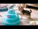 Cat Toy Roller., 3 Level Towers Tracks Roller with Three Colorful Balls