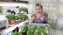 ЭКРАН ДЛЯ ПОДСВЕТКИ РАССАДЫ ! Выращивание цветы удобрение освещение подкормка семена томаты