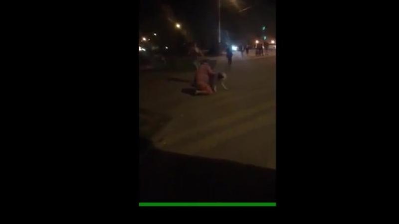 Видео житель Липецка натравил собак на обидчика