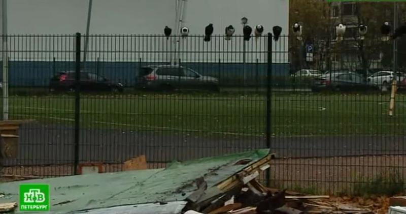 В Питере по указанию чиновников варварски уничтожили голубятню с редкими птицами