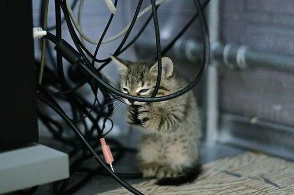 Нет китикета - нет интернета